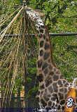 Frühling im Zoo - Tiergarten Schönbrunn - Mi 14.04.2004 - 15