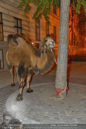 Ströck 1001 Nacht - Aux Gazelles - Sa 05.10.2013 - 179