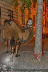 Ströck 1001 Nacht - Aux Gazelles - Sa 05.10.2013 - 180