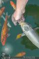 Yvonne Rueff Polterer und Grillfest - Hanner - Mi 15.07.2015 - Fische im Schwimmteich18