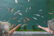 Yvonne Rueff Polterer und Grillfest - Hanner - Mi 15.07.2015 - Fische im Schwimmteich20