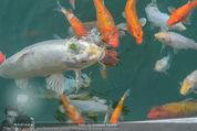 Yvonne Rueff Polterer und Grillfest - Hanner - Mi 15.07.2015 - Fische im Schwimmteich21