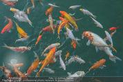 Yvonne Rueff Polterer und Grillfest - Hanner - Mi 15.07.2015 - Fische im Schwimmteich22