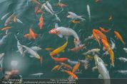 Yvonne Rueff Polterer und Grillfest - Hanner - Mi 15.07.2015 - Fische im Schwimmteich23