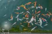 Yvonne Rueff Polterer und Grillfest - Hanner - Mi 15.07.2015 - Fische im Schwimmteich24