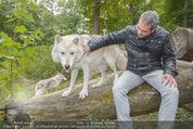 Wolf Experience - Wolfsgehege Ernstbrunn - Mi 30.09.2015 - Robert LETZ mit W�lfen, Wolf26