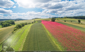 Österreich in Farben - Österreich - Mo 02.07.2018 - Luftbild Drohne Mohnfeld Blumen blühen, Mohn, Mohnblume, Mohndo2