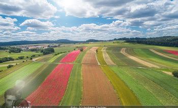 Österreich in Farben - Österreich - Mo 02.07.2018 - Luftbild Drohne Mohnfeld Blumen blühen, Mohn, Mohnblume, Mohndo1