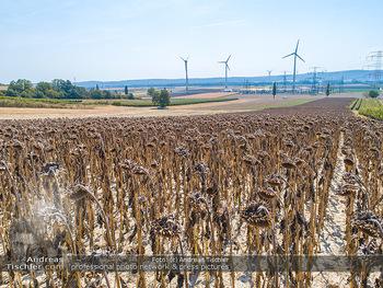 Hitze und Dürre - Niederösterreich - Do 23.08.2018 - Klimawandel Dürre Hitzewelle Hitzeperiode Landwirtschaft vertro1