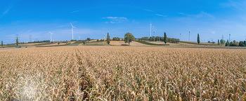 Hitze und Dürre - Niederösterreich - Do 23.08.2018 - Klimawandel Dürre Hitzewelle Hitzeperiode Landwirtschaft vertro4