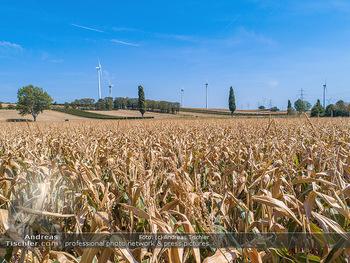 Hitze und Dürre - Niederösterreich - Do 23.08.2018 - Klimawandel Dürre Hitzewelle Hitzeperiode Landwirtschaft vertro5