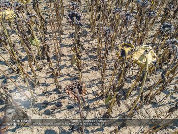 Hitze und Dürre - Niederösterreich - Do 23.08.2018 - Klimawandel Dürre Hitzewelle Hitzeperiode Landwirtschaft vertro11