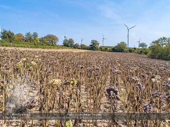 Hitze und Dürre - Niederösterreich - Do 23.08.2018 - Klimawandel Dürre Hitzewelle Hitzeperiode Landwirtschaft vertro12