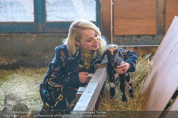 Fotoshooting Silvia Schneider - Div. Locations Österreich - Mo 25.02.2019 - Silvia SCHNEIDER mit neugeborenem Lamm, junges Schaf71