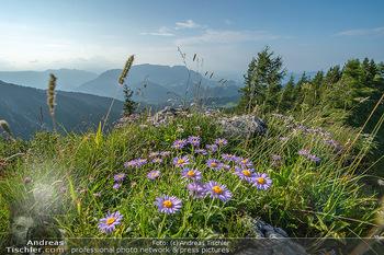 Österreich in Farben - Österreich - Do 31.10.2019 - Bergwelt Blumen Alm Alpen Wandern Salzburg Sommer Landschaft Ös87