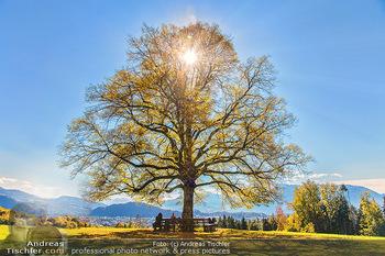 Österreich in Farben - Österreich - Do 31.10.2019 - Salzburg Baum Maria Alm Sonne blauer Himmel Bankerl Urlaub Relax90