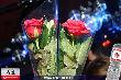 Club Night - Marias Roses - Sa 05.11.2005 - 25