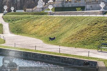 Corona Lokalaugenschein - Wien - Mo 16.03.2020 - ein einzelner Mensch liegt in der Wiese bei Gloriette im Schloss14