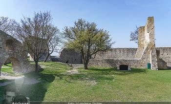 Fototour Großraum Hainburg - Hainburg, Carnuntum - Fr 27.03.2020 - Burgruine Heimenburg Hainburg Befestigungsanlage historische Anl19