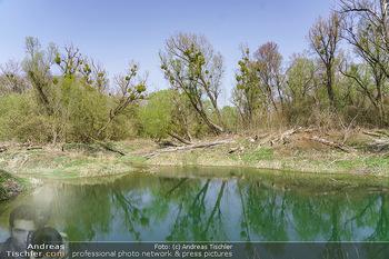 Fototour Großraum Hainburg - Hainburg, Carnuntum - Fr 27.03.2020 - Stopfenreuther Au DonauAuen Umwelt Naturschutzgebiet Wildnis Urw40