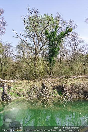 Fototour Großraum Hainburg - Hainburg, Carnuntum - Fr 27.03.2020 - Stopfenreuther Au DonauAuen Umwelt Naturschutzgebiet Wildnis Urw41