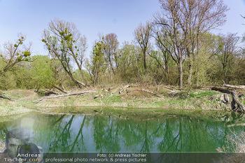 Fototour Großraum Hainburg - Hainburg, Carnuntum - Fr 27.03.2020 - Stopfenreuther Au DonauAuen Umwelt Naturschutzgebiet Wildnis Urw42