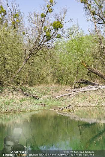 Fototour Großraum Hainburg - Hainburg, Carnuntum - Fr 27.03.2020 - Stopfenreuther Au DonauAuen Umwelt Naturschutzgebiet Wildnis Urw44
