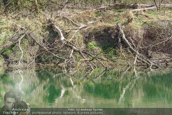Fototour Großraum Hainburg - Hainburg, Carnuntum - Fr 27.03.2020 - Stopfenreuther Au DonauAuen Umwelt Naturschutzgebiet Wildnis Urw45