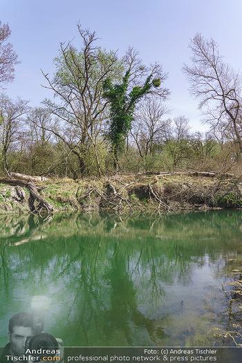 Fototour Großraum Hainburg - Hainburg, Carnuntum - Fr 27.03.2020 - Stopfenreuther Au DonauAuen Umwelt Naturschutzgebiet Wildnis Urw46
