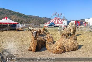 Corona Feature - Wien, NÖ - So 05.04.2020 - gestrandeter Zirkus bei Berndorf NÖ Tiere Kamele Pferde Ponys W39