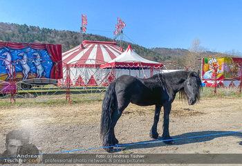 Corona Feature - Wien, NÖ - So 05.04.2020 - gestrandeter Zirkus bei Berndorf NÖ Tiere Kamele Pferde Ponys W42