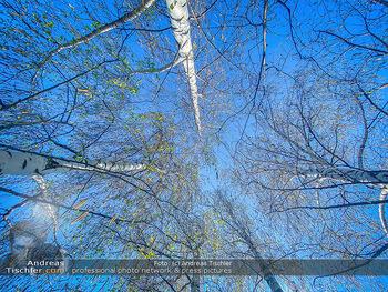 Birkenpollen Feature - Niederösterreich - Do 09.04.2020 - Birkenpollen Birken Baumstamm Baumkrone Idylle Natur Erholung Po11