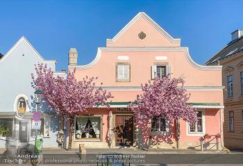 Frühling Feature - Wien und Niederösterreich - So 12.04.2020 - blühender Zierkirsche Baum pink blühend Frühling Natur Bäume2