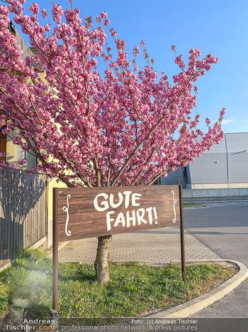 Frühling Feature - Wien und Niederösterreich - So 12.04.2020 - Gute Fahrt Schild blühender Zierkirsche Baum pink blühend Frü11