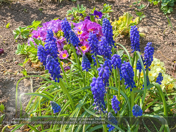 Frühling Feature - Wien und Niederösterreich - So 12.04.2020 - Rauchfangkehrer Gartenblumen Garten Frühling garteln Blumen Ver12