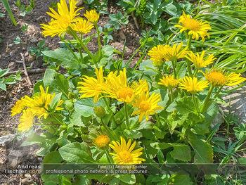 Frühling Feature - Wien und Niederösterreich - So 12.04.2020 - gelbe Gartenblumen Garten Frühling garteln Blumen Verschönerun18