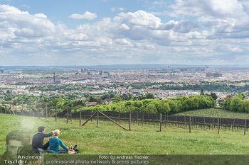 Blick über Wien - Wien - Fr 01.05.2020 - Fernblick über Wien von der Bellevuewiese bei Schönwetter4