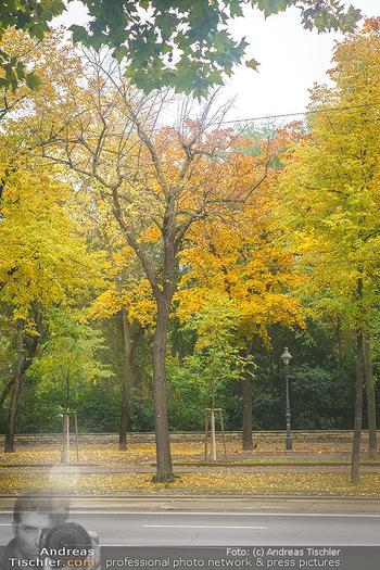 Big Bus Citytour - Wien - So 25.10.2020 - Herbstlich gefärbte Bäume entlang der Ringstraße in Wien, gel22