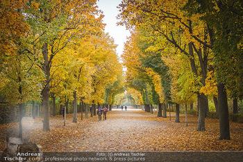 Big Bus Citytour - Wien - So 25.10.2020 - Herbst in Schönbrunn, Bäume, Baumschnitt, herbstlich verfärbt33
