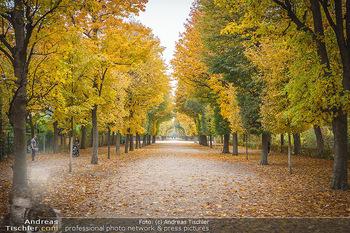 Big Bus Citytour - Wien - So 25.10.2020 - Herbst in Schönbrunn, Bäume, Baumschnitt, herbstlich verfärbt34