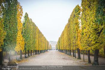 Big Bus Citytour - Wien - So 25.10.2020 - Herbst in Schönbrunn, Bäume, Baumschnitt, herbstlich verfärbt36