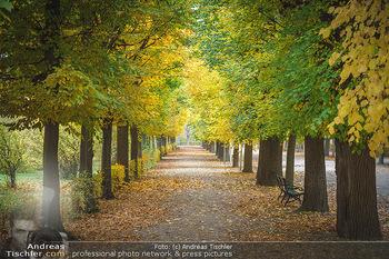 Big Bus Citytour - Wien - So 25.10.2020 - Herbst in Schönbrunn, Bäume, Baumschnitt, herbstlich verfärbt37