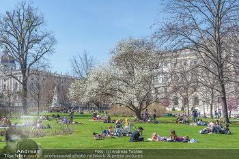 Lokalaugenschein Wien - Wien - Di 30.03.2021 - Menschen genießen bei Picknick im Burggarten die Frühlingstemp2
