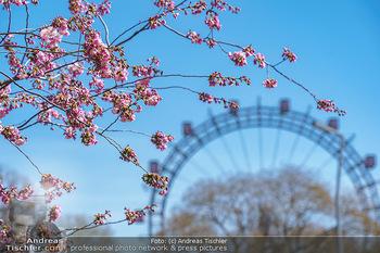 Lokalaugenschein Wien - Wien - Di 30.03.2021 - Wiener RIESENRAD, Tourismusattraktion, Wahrzeichen, Gondeln im P31