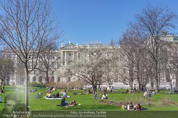 Lokalaugenschein Wien - Wien - Di 30.03.2021 - Menschen genießen bei Picknick im Burggarten die Frühlingstemp61