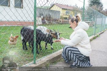 Spaziergang mit Lili Klein - Maria Gugging - Do 08.04.2021 - Liliana KLEIN (Lili, Lilli) mit Ziegen und Hühnern beim Bio-Bau3