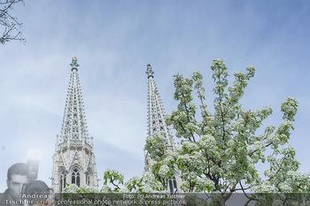 Lokalaugenschein Wien - Wien - Mo 12.04.2021 - Blühender Baum im Votivpark vor der Votivkirche2