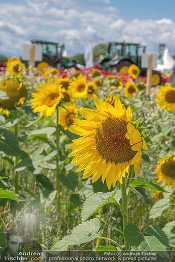 Biofeldtage Tag 1 - Seehof, Donnerskirchen - Fr 06.08.2021 - Sonnenblumen Feld, Traktoren, Blume, Wiese, Blumenwiese, Sonne, 163