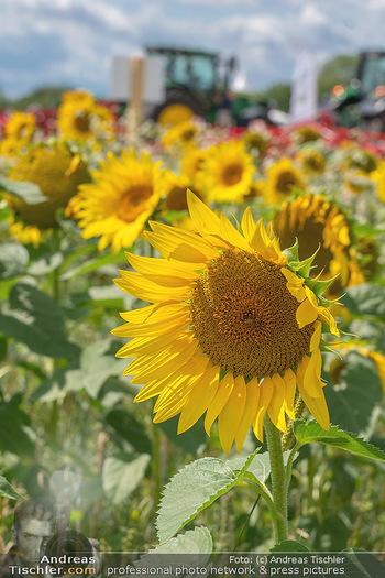 Biofeldtage Tag 1 - Seehof, Donnerskirchen - Fr 06.08.2021 - Sonnenblumen Feld, Traktoren, Blume, Wiese, Blumenwiese, Sonne, 164