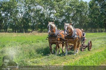 Biofeldtage Tag 2 - Seehof, Donnerskirchen - Sa 07.08.2021 -  17